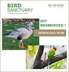 BirdSanctuary in Kangra Himachal Pradesh