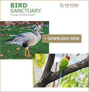 Bird Sanctuary in Kangra, Himachal