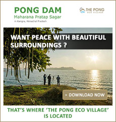 hotel near Pong Dam Kangra Himachal